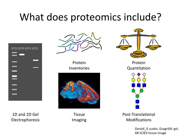 What does proteomics include?