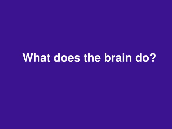 What does the brain do?