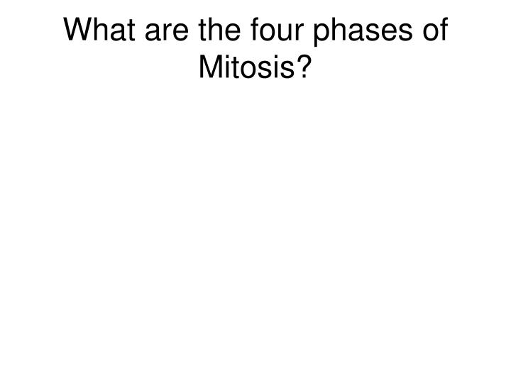 What are the four phases of Mitosis?