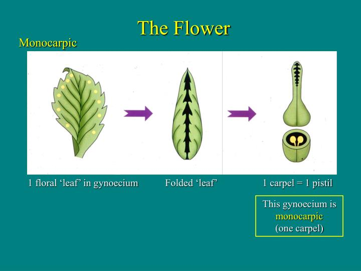 Folded 'leaf'