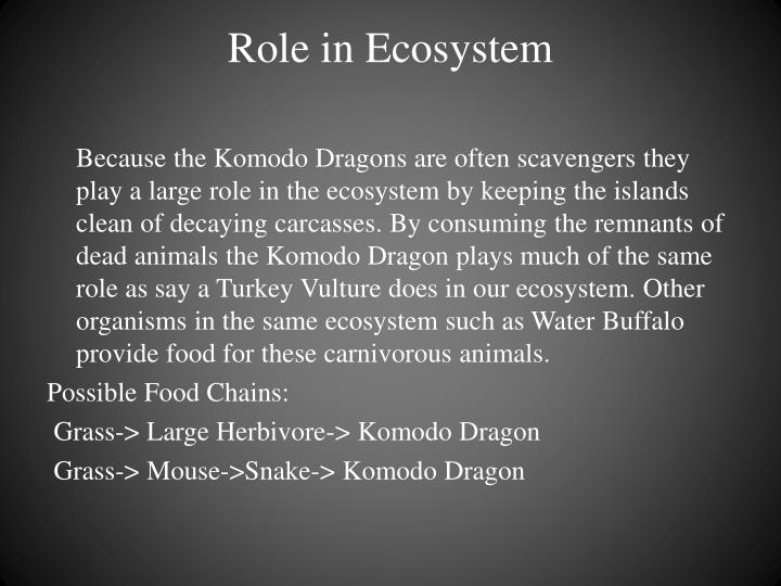 Role in Ecosystem