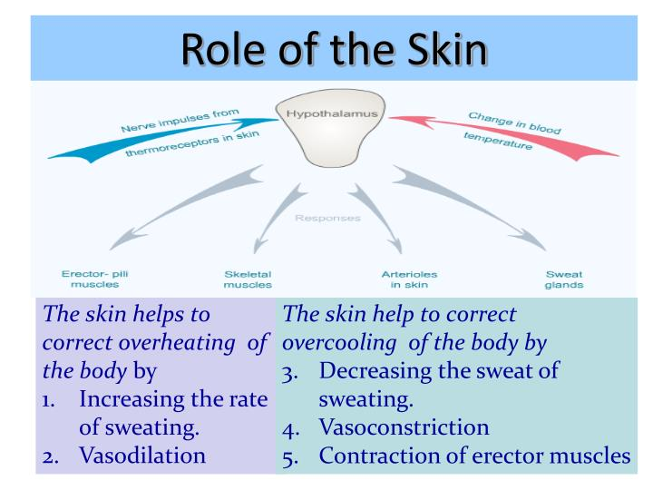 Role of the Skin