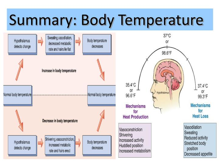 Summary: Body Temperature