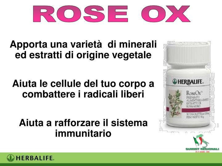 ROSE OX