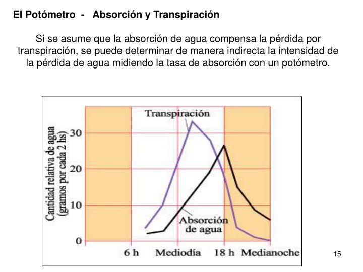El Potómetro  -   Absorción y Transpiración