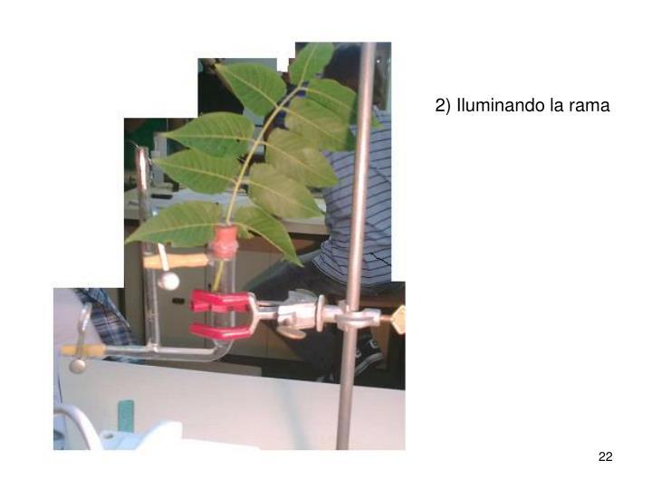 2) Iluminando la rama