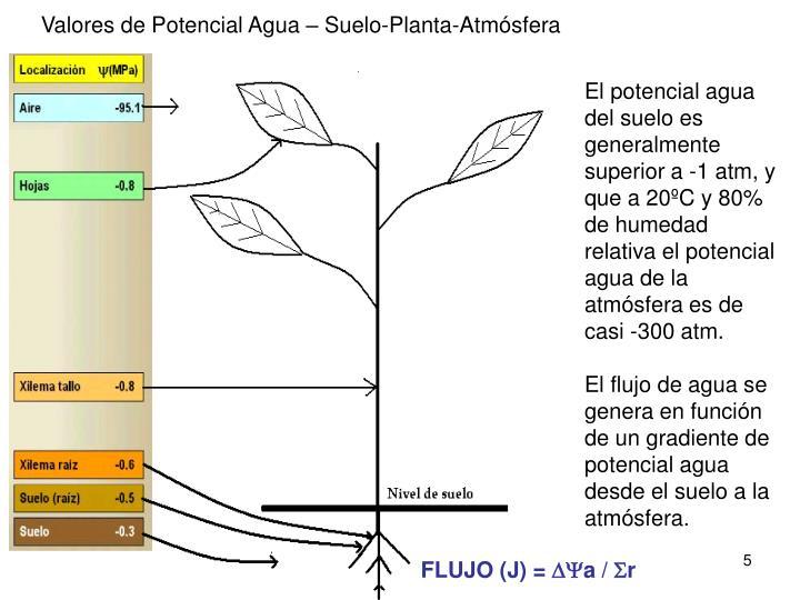 Valores de Potencial Agua – Suelo-Planta-Atmósfera