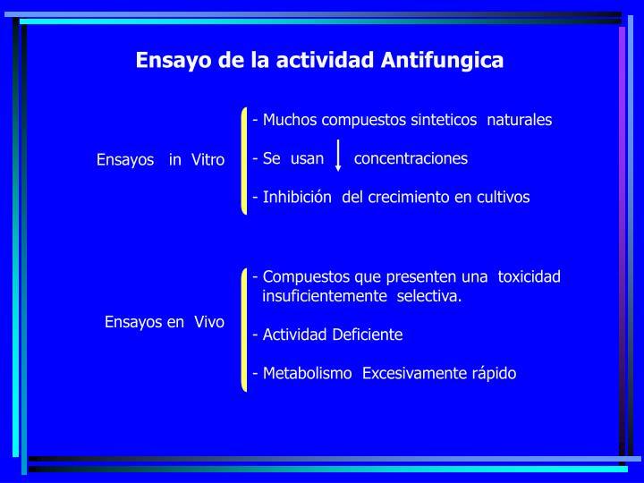 Ensayo de la actividad Antifungica