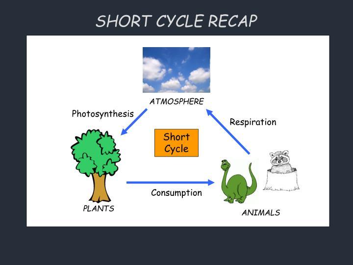 SHORT CYCLE RECAP
