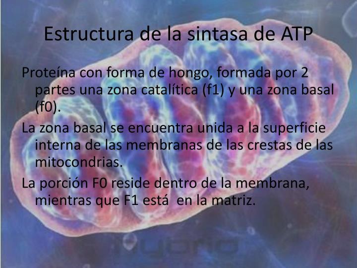 Estructura de la sintasa de ATP