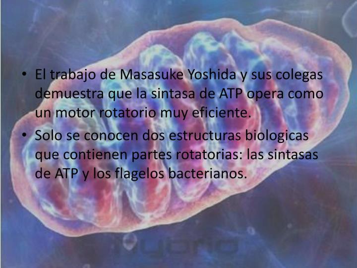 El trabajo de Masasuke Yoshida y sus colegas demuestra que la sintasa de ATP opera como un motor rotatorio muy eficiente.