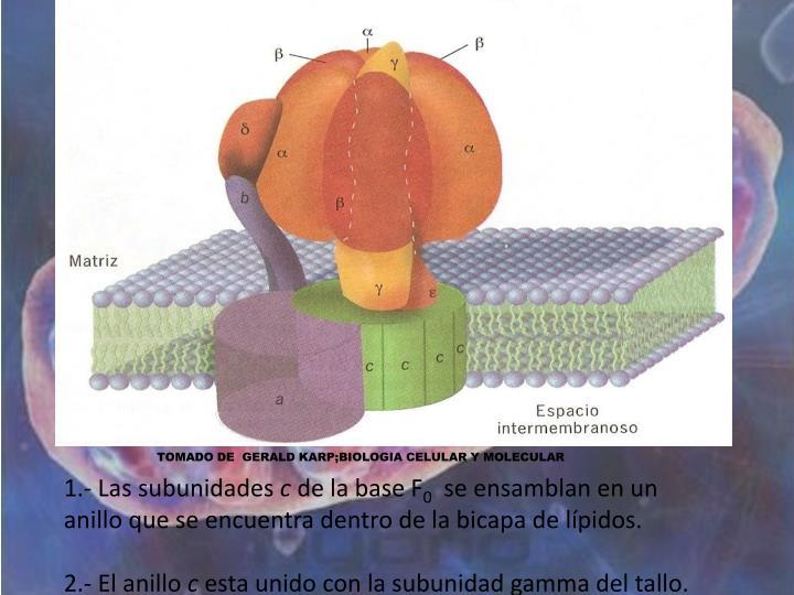 TOMADO DE  GERALD KARP;BIOLOGIA CELULAR Y MOLECULAR
