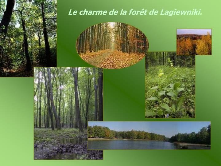 Le charme de la forêt de Lagiewniki.