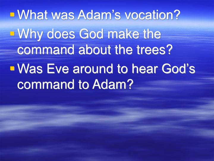 What was Adam's vocation?