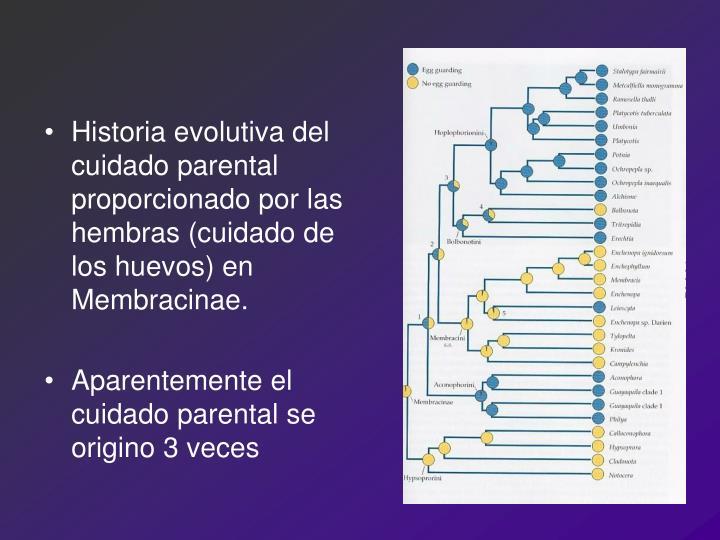 Historia evolutiva del cuidado parental proporcionado por las hembras (cuidado de los huevos) en Membracinae.