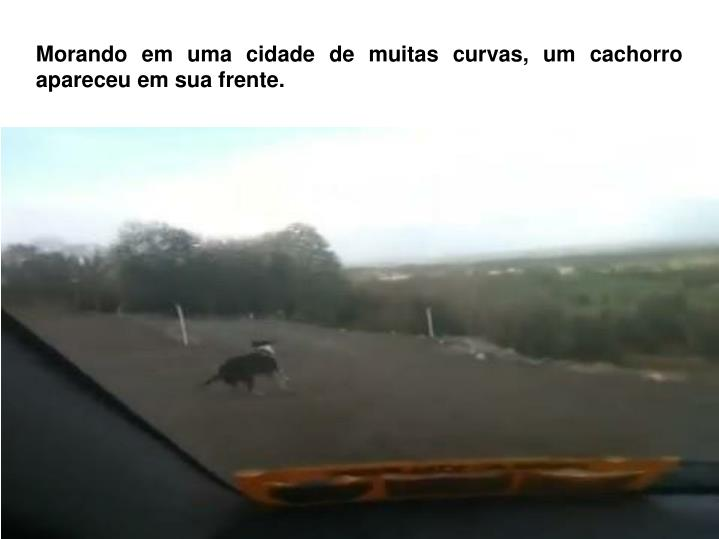 Morando em uma cidade de muitas curvas, um cachorro apareceu em sua frente.