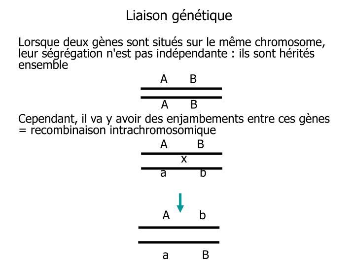 Liaison génétique