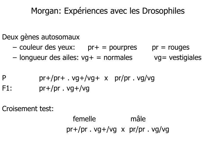 Morgan: Expériences avec les Drosophiles