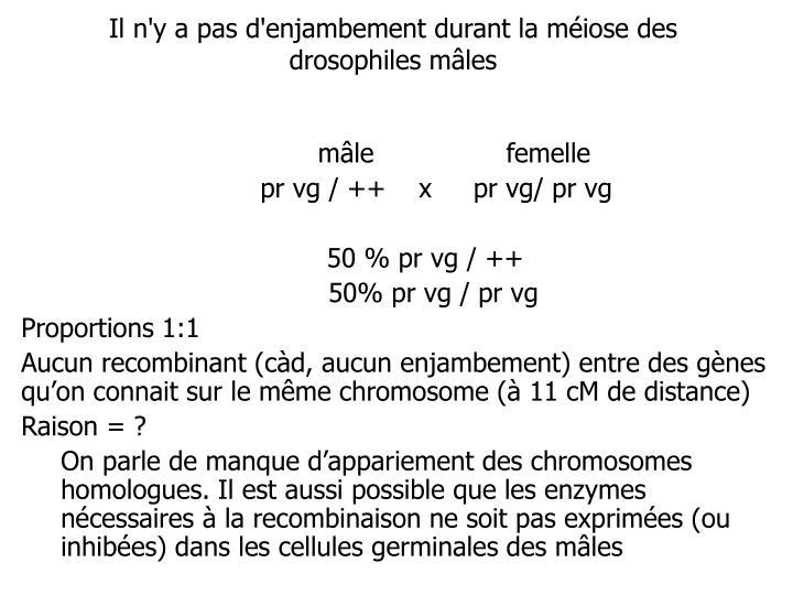 Il n'y a pas d'enjambement durant la méiose des drosophiles mâles