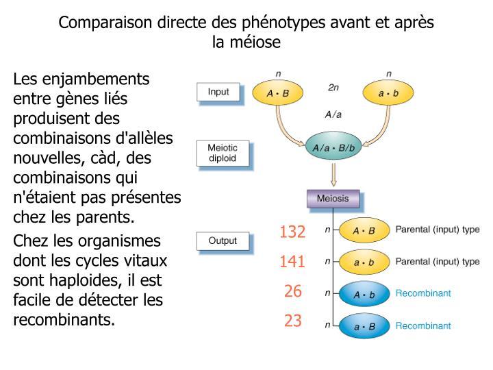 Les enjambements entre gènes liés produisent des combinaisons d'allèles nouvelles, càd, des combinaisons qui n'étaient pas présentes chez les parents.