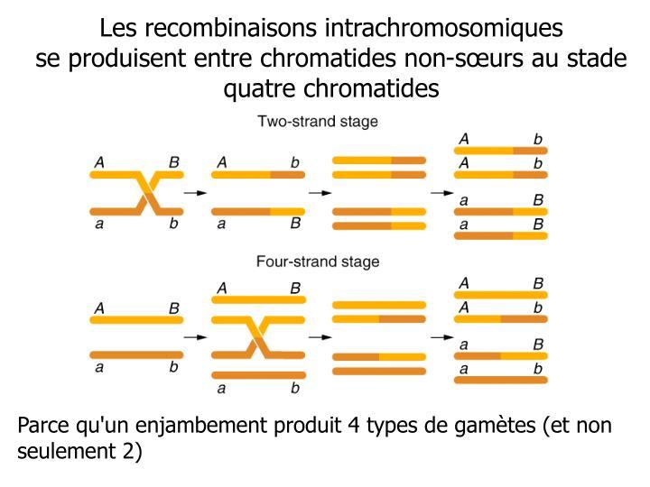 Les recombinaisons intrachromosomiques