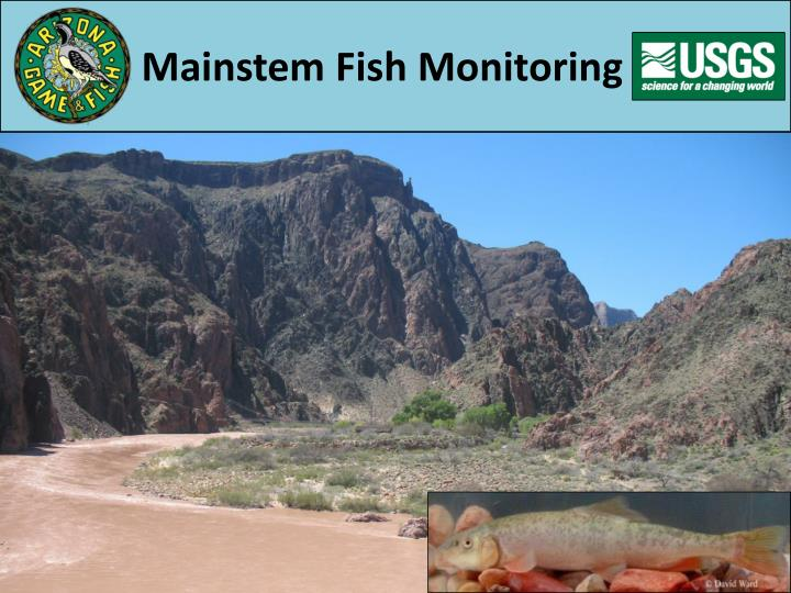 Mainstem Fish Monitoring