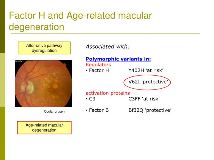 Factor H and Age-related macular degeneration