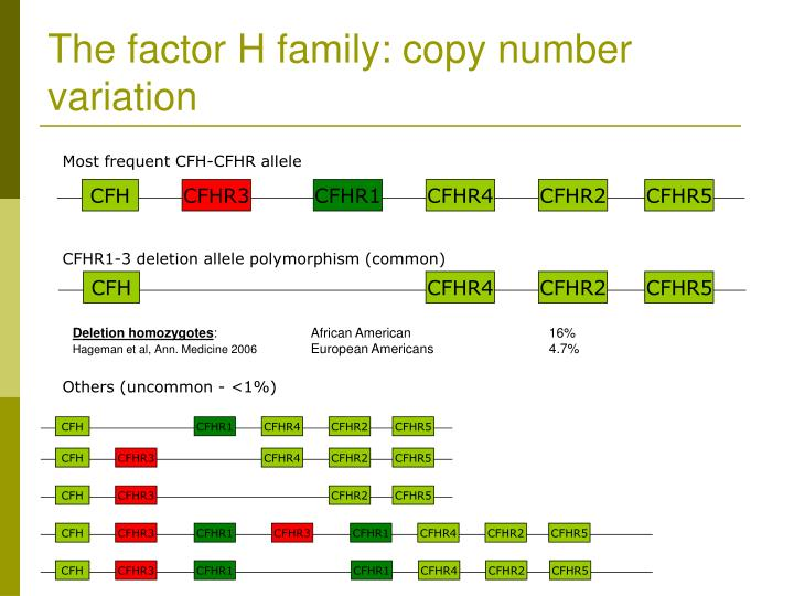 The factor H family: copy number variation