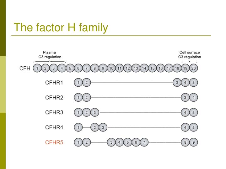The factor H family
