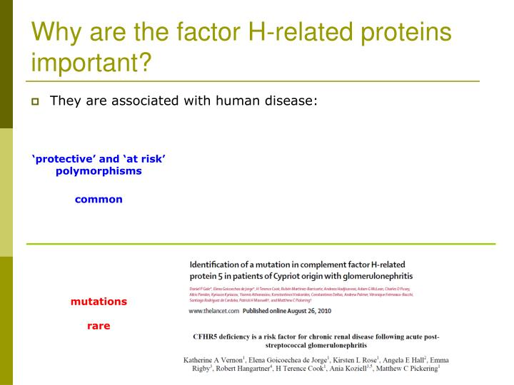 Why are the factor H-related proteins important?