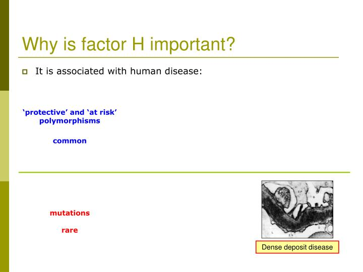 Why is factor H important?