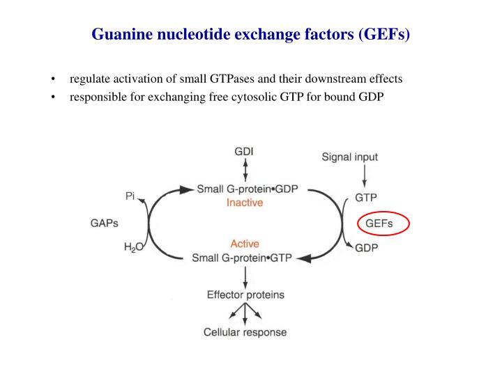 Guanine nucleotide exchange factors (GEFs)