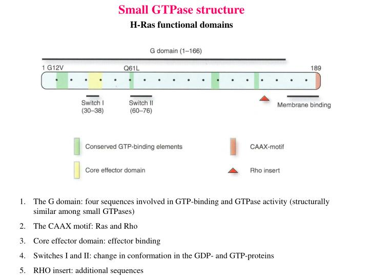 Small GTPase structure