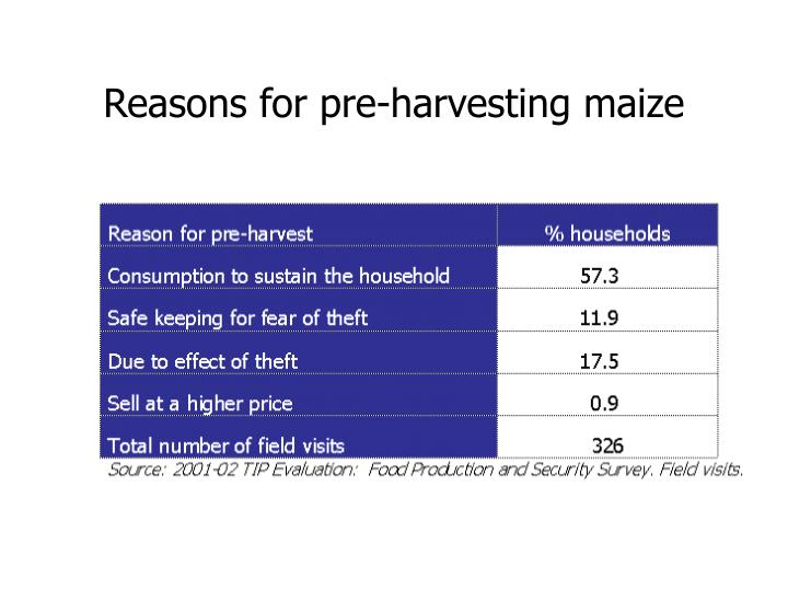 Reasons for pre-harvesting maize