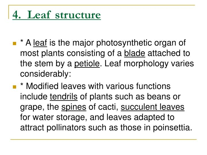 4.  Leaf structure