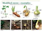 modified stems examples