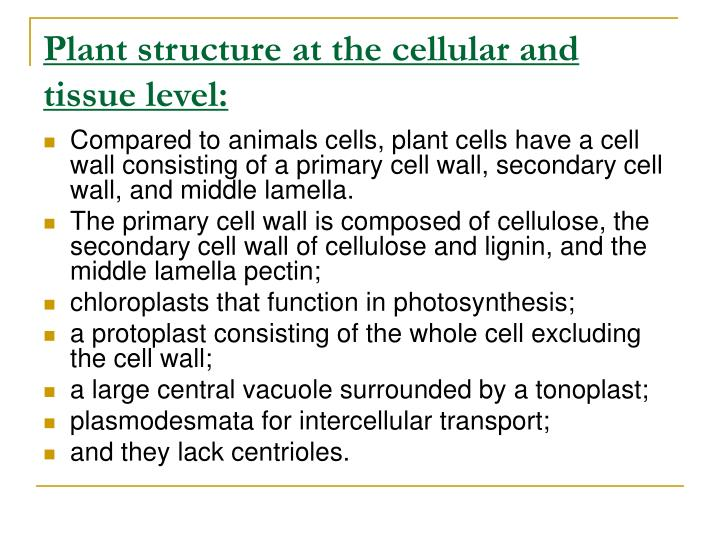 Plant structure at the cellular and tissue level: