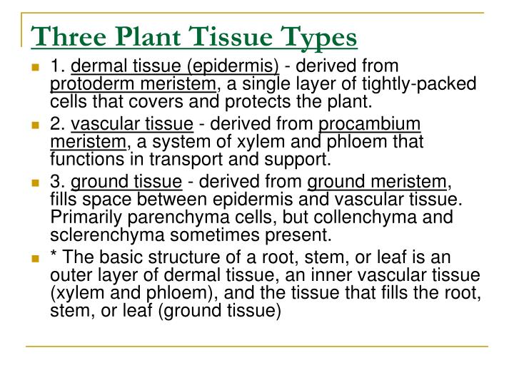 Three Plant Tissue Types