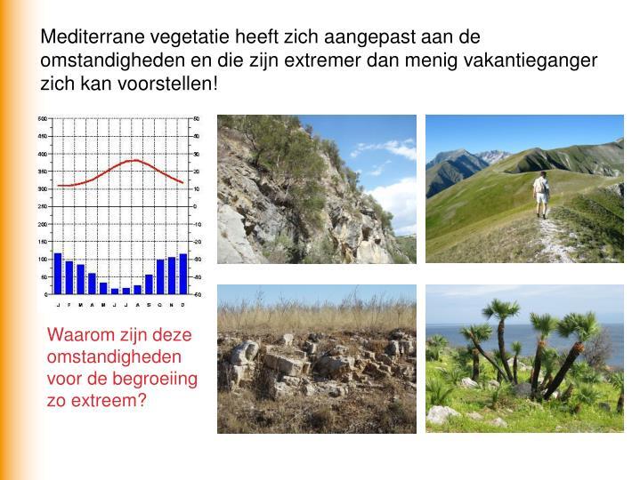 Mediterrane vegetatie heeft zich aangepast aan de omstandigheden en die zijn extremer dan menig vakantieganger zich kan voorstellen!