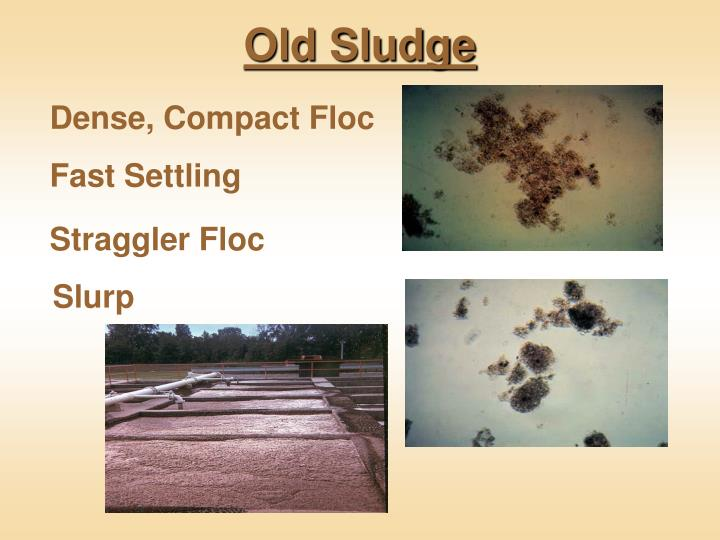 Old Sludge