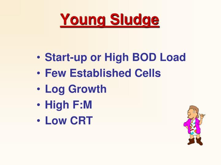 Young Sludge