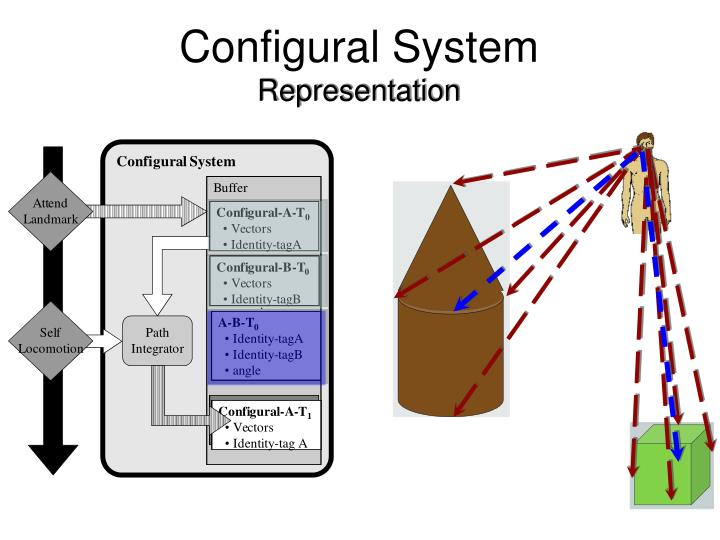 Configural System
