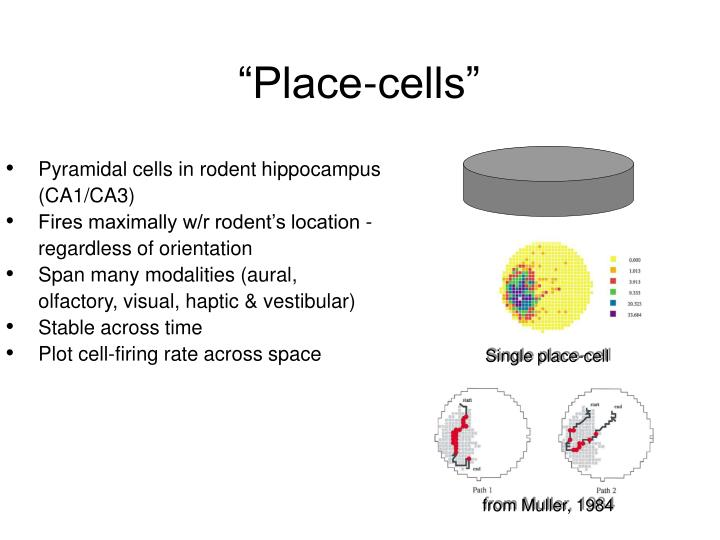 Single place-cell