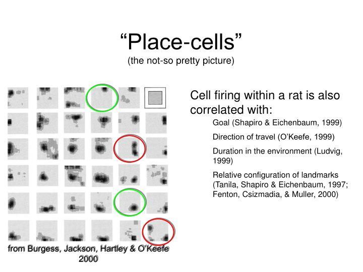 """Place-cells"""