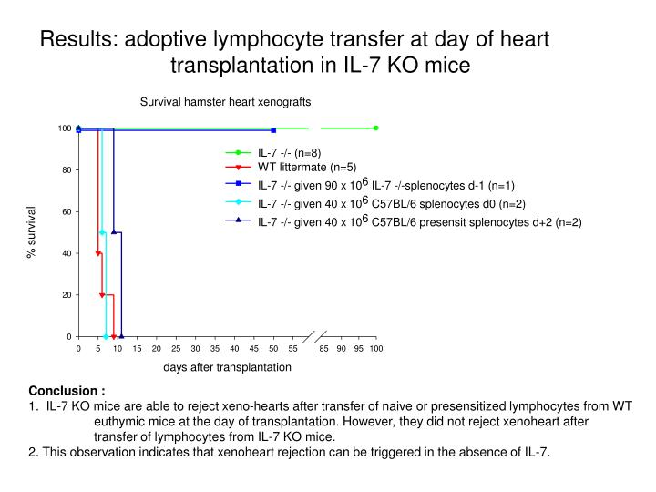 Results: adoptive lymphocyte transfer at day of heart transplantation in IL-7 KO mice