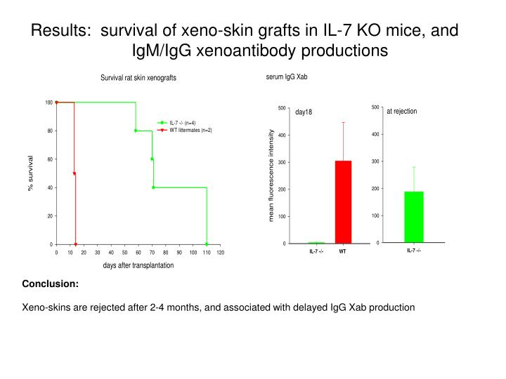 Results:  survival of xeno-skin grafts in IL-7 KO mice, and IgM/IgG xenoantibody productions