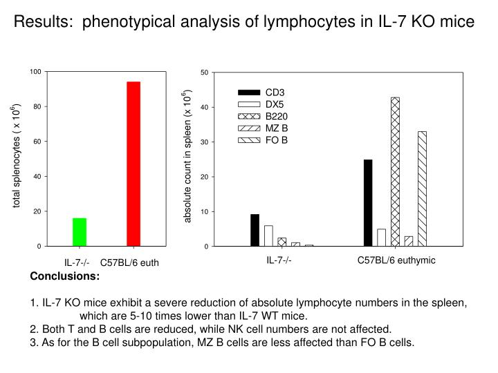 Results:  phenotypical analysis of lymphocytes in IL-7 KO mice