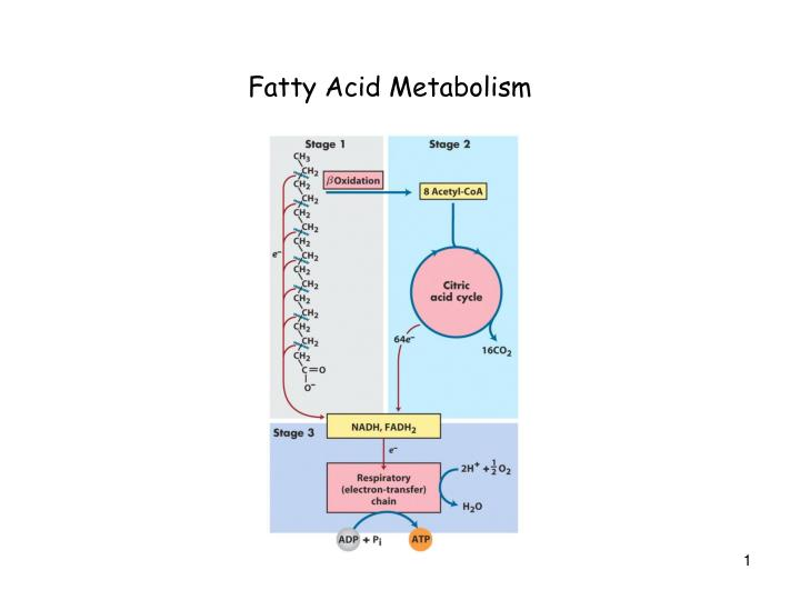 Fatty Acid Metabolism
