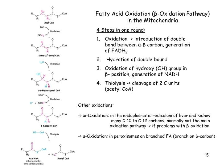 Fatty Acid Oxidation (