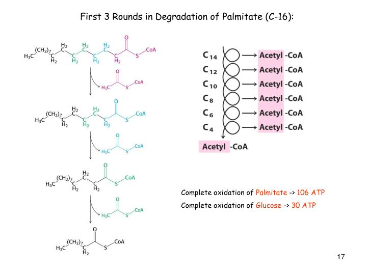 First 3 Rounds in Degradation of Palmitate (C-16):